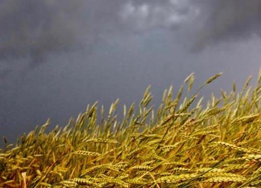 Agro-omeopatia, se a guarire sono le piante